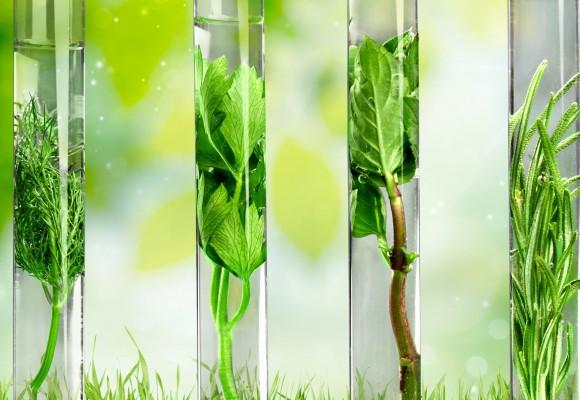 Dlaczego warto zastąpić suplementy, herbatki ziołowe i syropy - naturalnymi olejkami eterycznymi?
